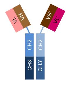 Bispecific scFv-AGGAbody